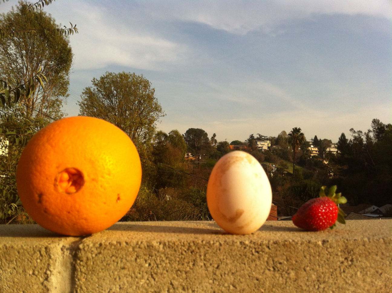 Orange, egg and strawberry from the microfarm