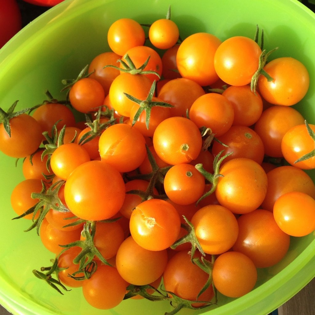 Bowl of yellow cherry tomatoes from my garden
