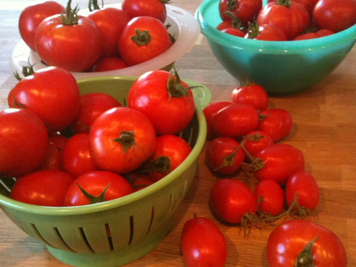 buckets of garden tomatoes