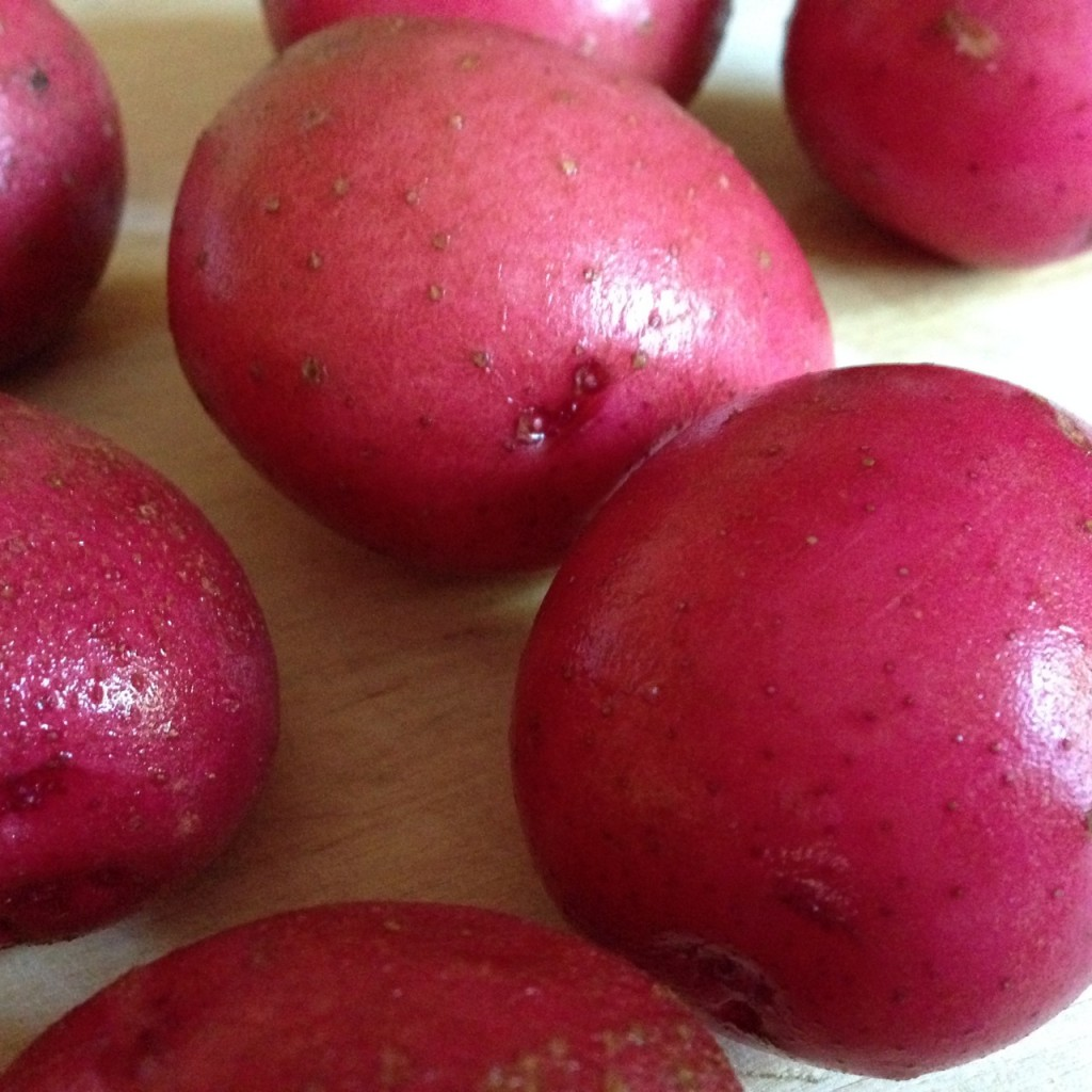 Freshly harvested #microfarm potatoes
